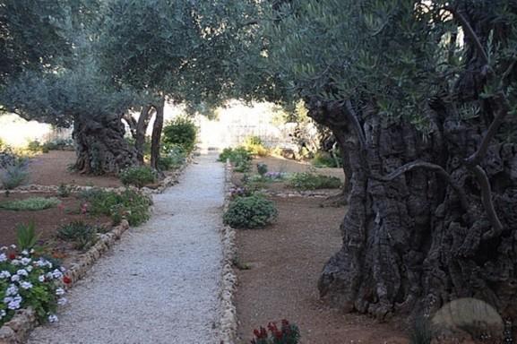 2-garden-of-gethsemane-jerusalem